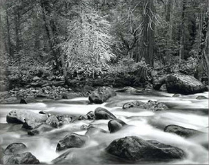 Merced River and Forest, John Sexton