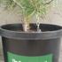 Portableforest2