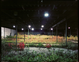 Frank\'s Nursery, Brian Ulrich