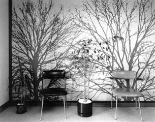 Untitled (Tree Wallpaper) 1980\'s, Lynne Cohen