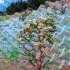 Land_detail_1-