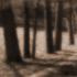 Ingraham_the_path