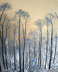 NM Pines,