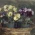 Yellow_violet_pansies