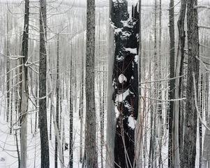 Burn #124, David Nadel