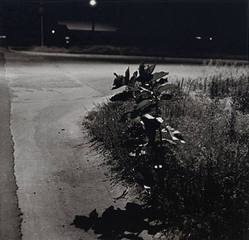 Longmont, Colorado, Robert Adams