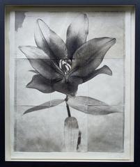 Lily 7, Charles Grogg