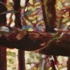 Primeval___detail_-72dpi