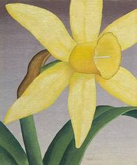 No. 28 Flower Forms (Daffodils), Stuart Walker