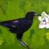 Crowpallet