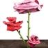 Ryman_rose_24_side_view_