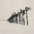 Tree_line__hamakoshimizu__hokkaido__japan__2007