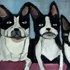 Dog_20x20_acrylic_on_linen_3