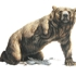 Bearii