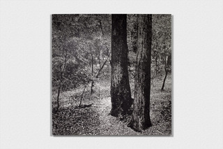 Untitled (Big Basin), James Chronister