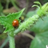 Ladybug__9_