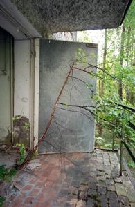 Tree_grows_in_doorway_-_web