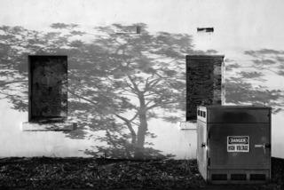 Tree Shadow at Thornburg, 2007, Charity Vargs