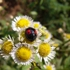 Ladybug__2_