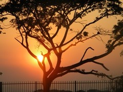 Sunset_with_tree