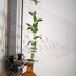 Plant_side_