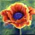 Poppy6x6