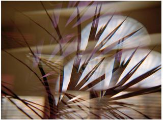 Interior Palm 2, Mariah Robertson