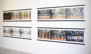 """Hluhluwe, South Africa - Sequence #1- 4"", David Gimbel"