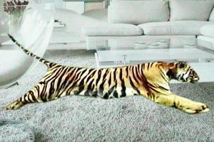 Tiger_white_shag_smaller