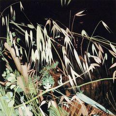 Mature_grass_summer_