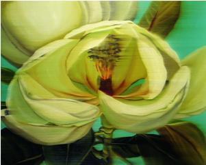 White magnolia    ,