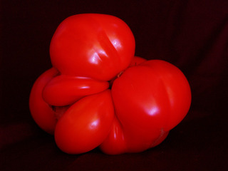 Crimson Tomato,Ginger VanHook