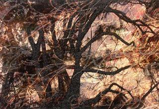 Tree Fantasy, Rosalind Schneider