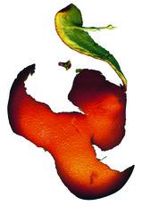 Orange no 5, Richard Gregory