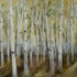 Birch_forest__autumn
