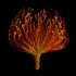 Protea1