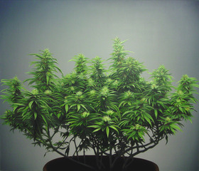 Support/Pot, Davis Langlois, in collaboration with Gaylan Gerber