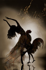 Annular Eclipse-Cock, Yuki Onodera