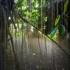 Ns_treesinmist_web