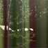 Tentsinthewoods_4