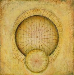 Untitled (Wheel/Lotus), Sara Crisp