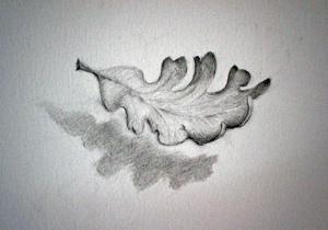 Oak_leaves_detail__jan_01_003