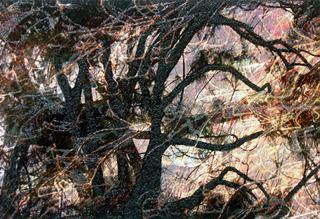 Tree Fantasy #4, Rosalind Schneider
