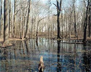Wolfe\'s Pond Park, swamp north of pond, winter , Joel Meyerowitz