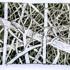 Tree_series_ink_wash_12x18