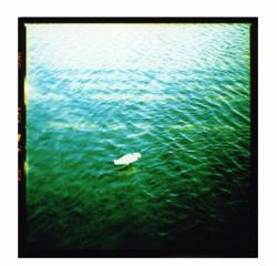 Egret, Lynn Milosz
