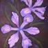 Irisweb
