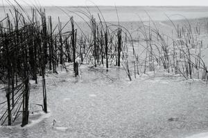 5_reeds_through_the_ice