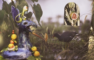 Moorhen with Dragon and Citrus,Elizabeth Bryant