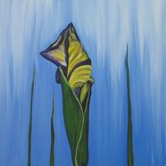 Water Iris,